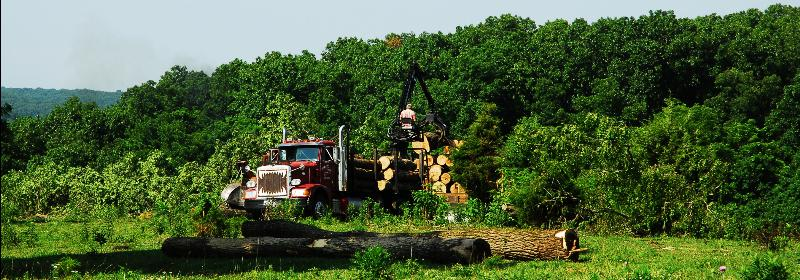 WARREN LAND_0013 LOGGING 1A_sized for Internet