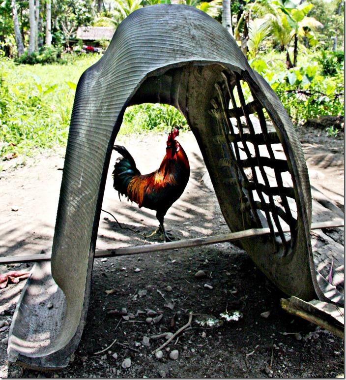 Rooser's Roost 003 Photo by Samuel E Warren Jr