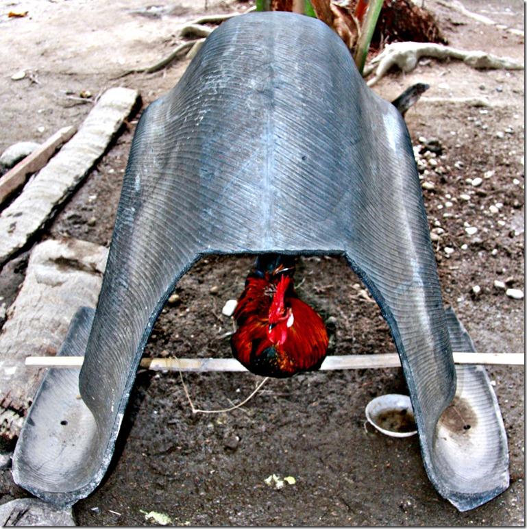 Rooser's Roost 004 Photo by Samuel E Warren Jr