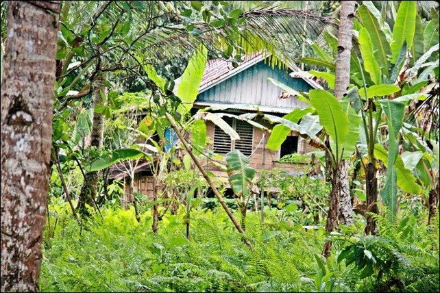 Jungle Homes Exteriors_Barangay Baras  Photos_Canon EOS 40 D Photo 0001_by Samuel E Warren Jr_resized