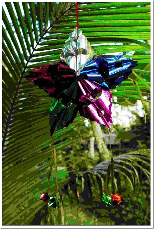 Christmas Star Photo 1 by Samuel E. Warren Jr_resized