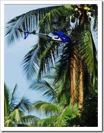 WARREN ONE SAILS PAST A COCONUT TREE THUMBNAIL