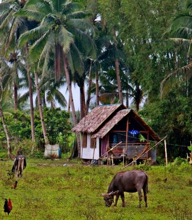Filipino Farm Photo by Samuel E. Warren Jr.