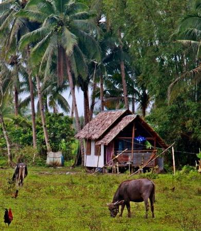 Filipino Farm Photo by Samuel E. Warren Jr.